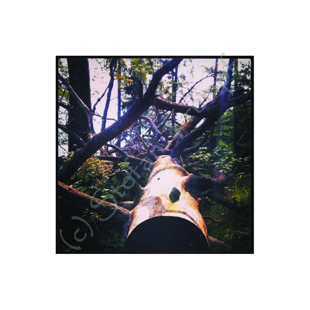 Instagrammed - Astwerk